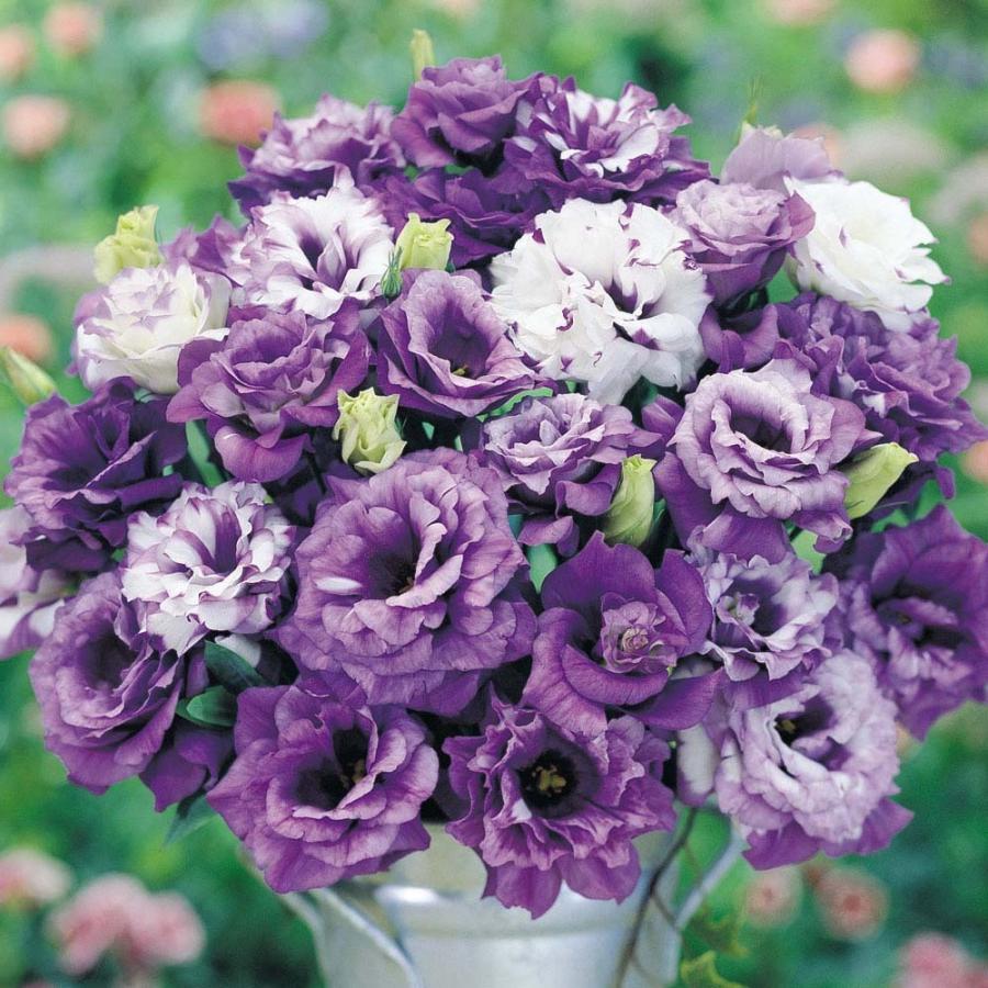 Purple Lisianthus | Laura's Favorite Flowers | LIG Events - Washington, DC Wedding and Event Planners