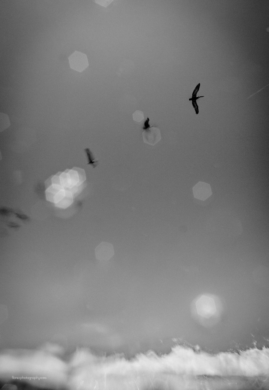 Bird st augustine
