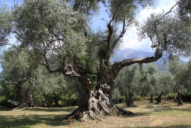 The Galilee region