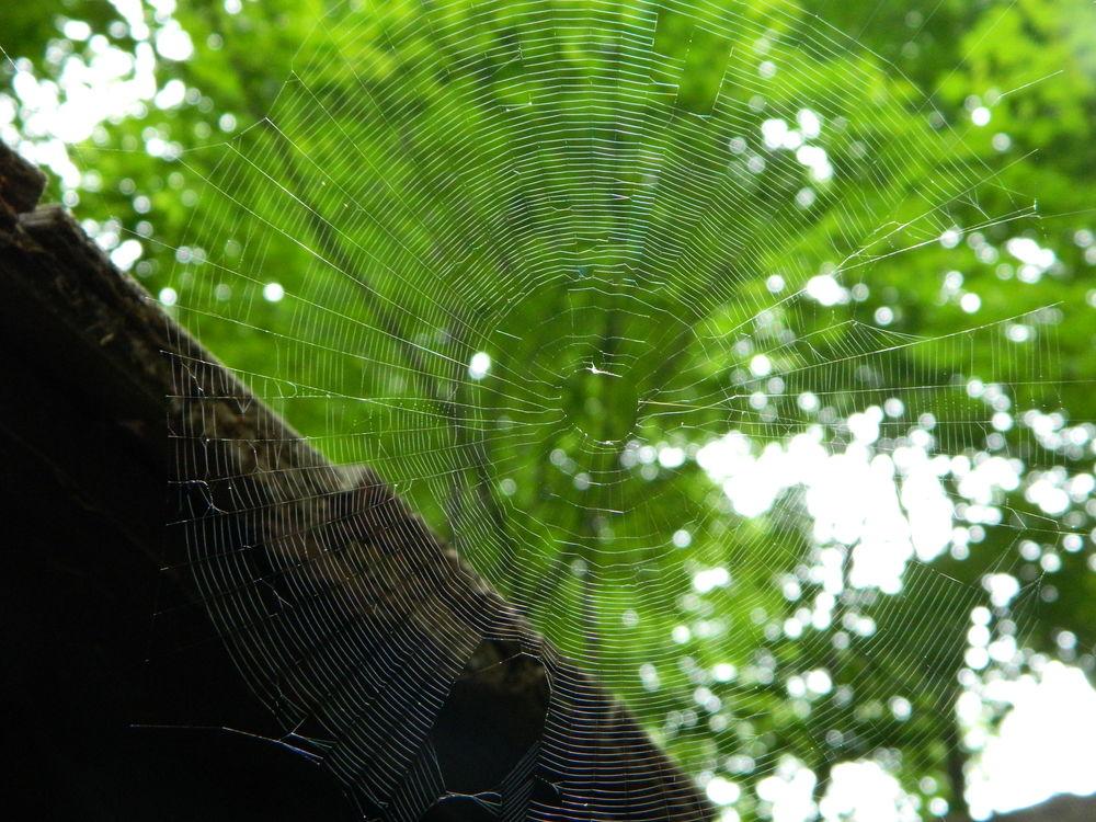 Delicate Weaving