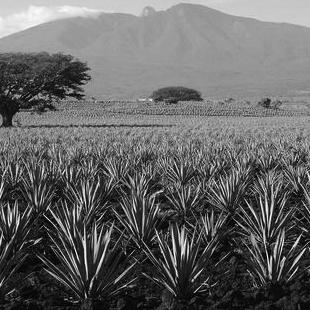SIEMBRA METL Mezcal | Oaxaca