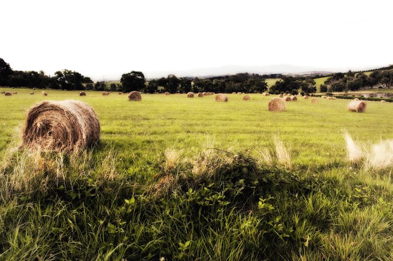 kate-deagan-landscapes (15).jpg