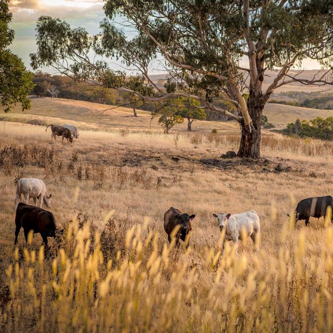 Rural & Landscapes -