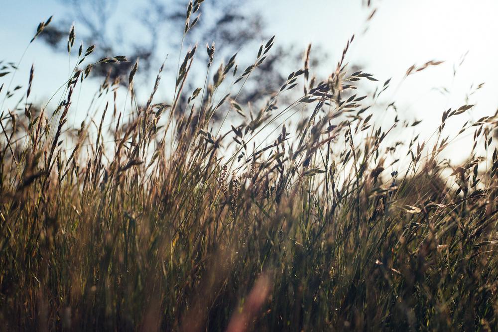 PhotoPortfolio-20.jpg