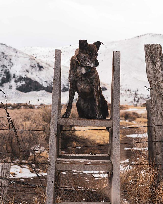 Which way to the dude ranch? // #prairiedog #cowdog #wilsondog