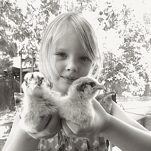 girl-holding-baby-chicks-poppy-garden