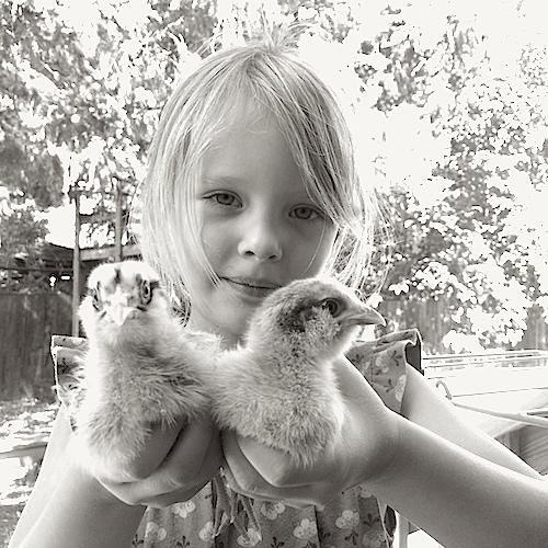 girl-holding-baby-chicks-poppy-garden