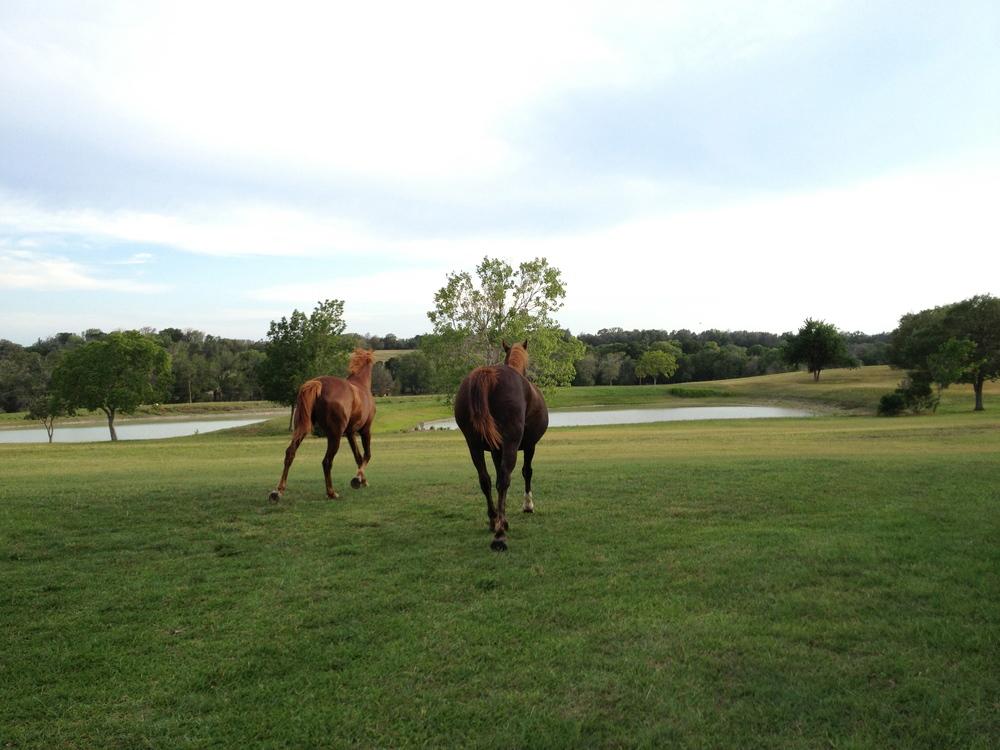 Ace and Dakota galloping off.
