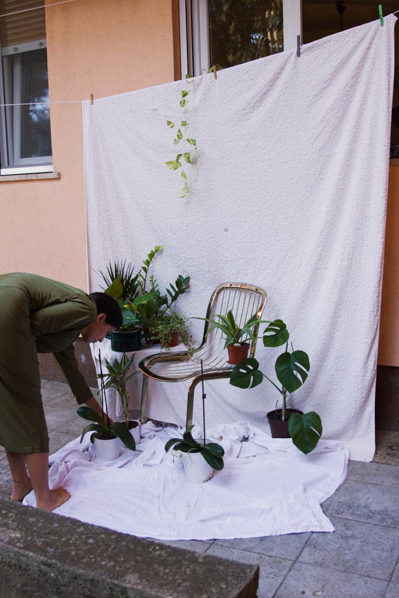 setup with plants