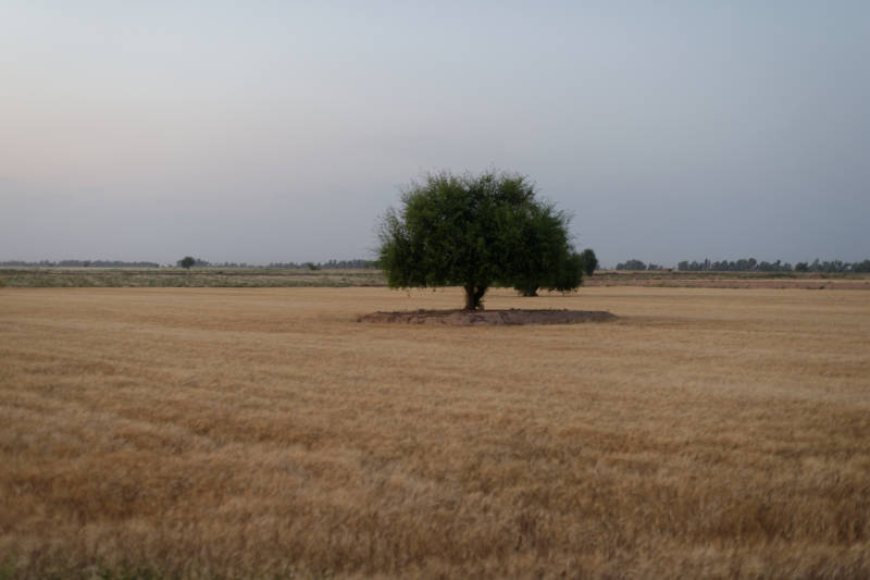Tree_Lonely_Khuzestan.jpg