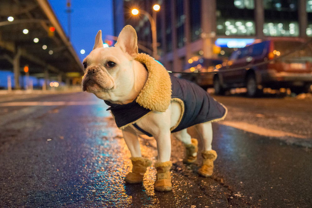 Winston in the City.jpg