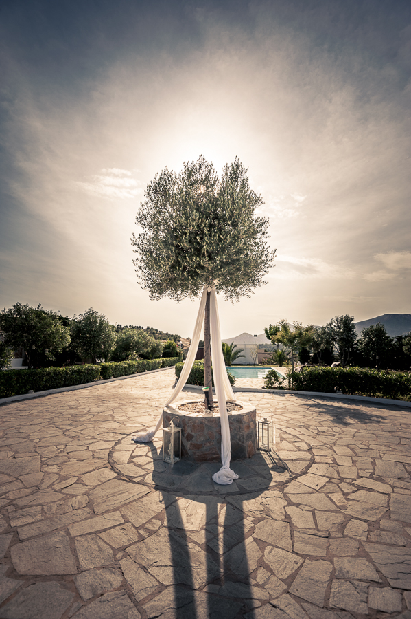 05_Wedding_In_Athens_Koropi_olive_tree.jpg