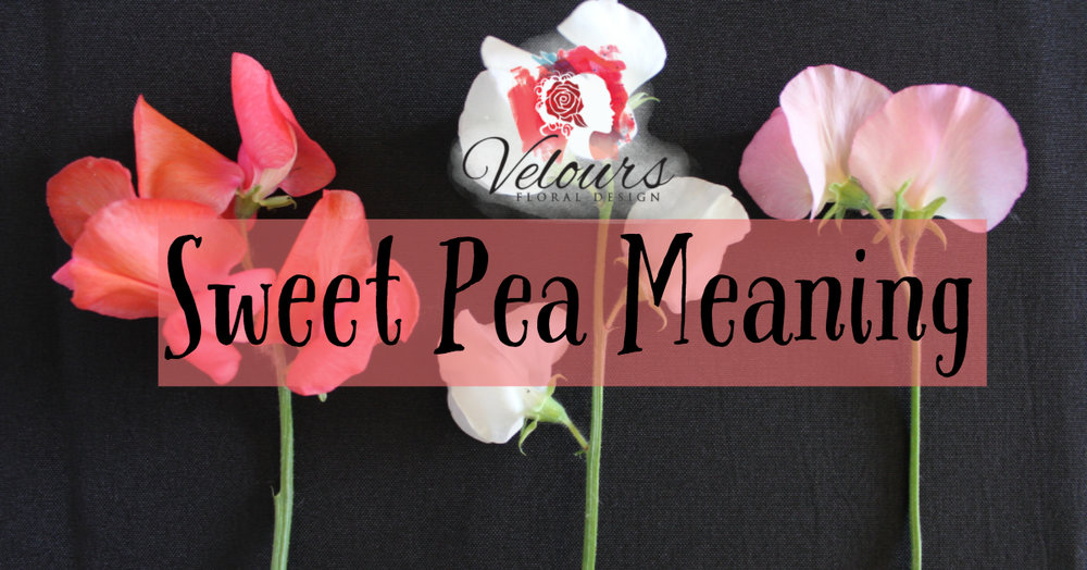 Sweet Pea Meaning