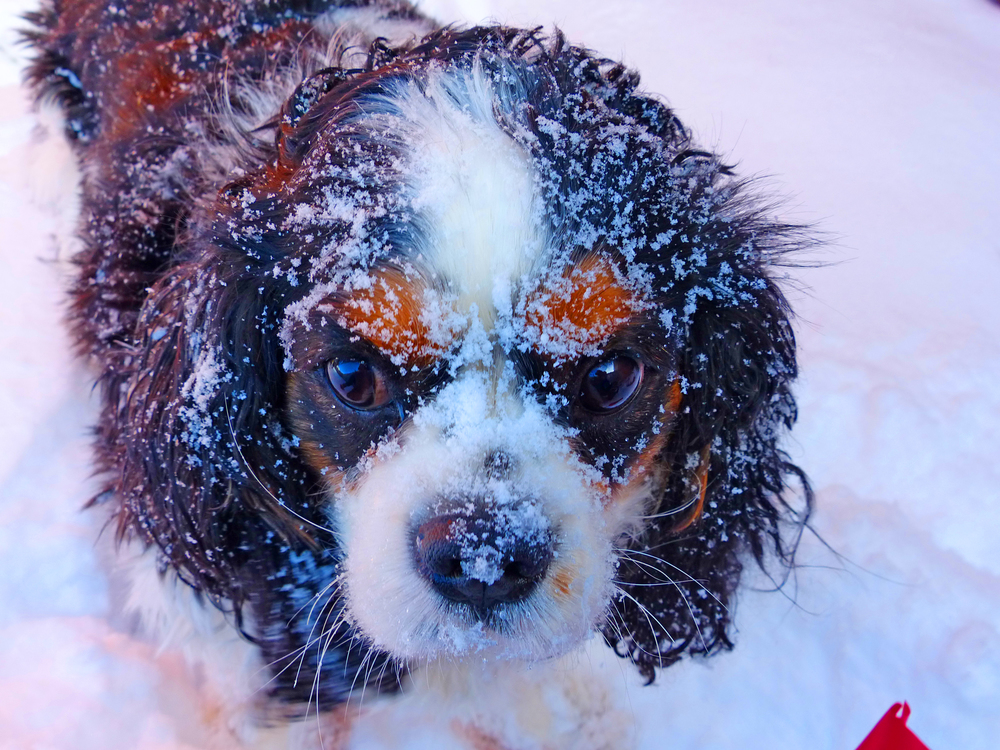 Emma and the Snow.jpg