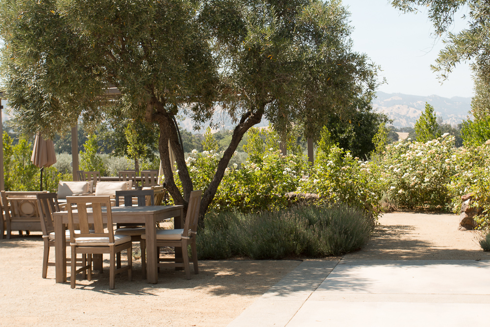 olive oil pics-14.jpg