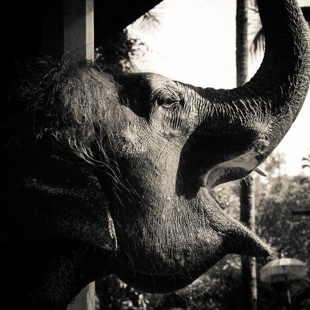 Mama Elephant Smiling
