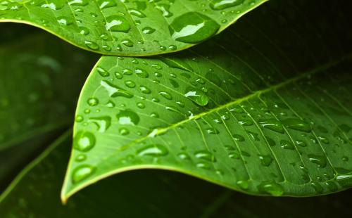 photodune-4660595-green-leaf-l.jpg