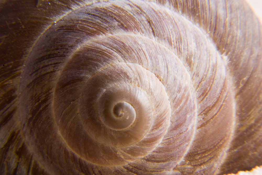 seashell_GyEXjS5O.jpg