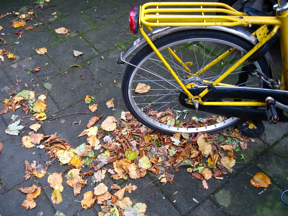 Leaves with yellow bicycle , Amsterdam, October 2013