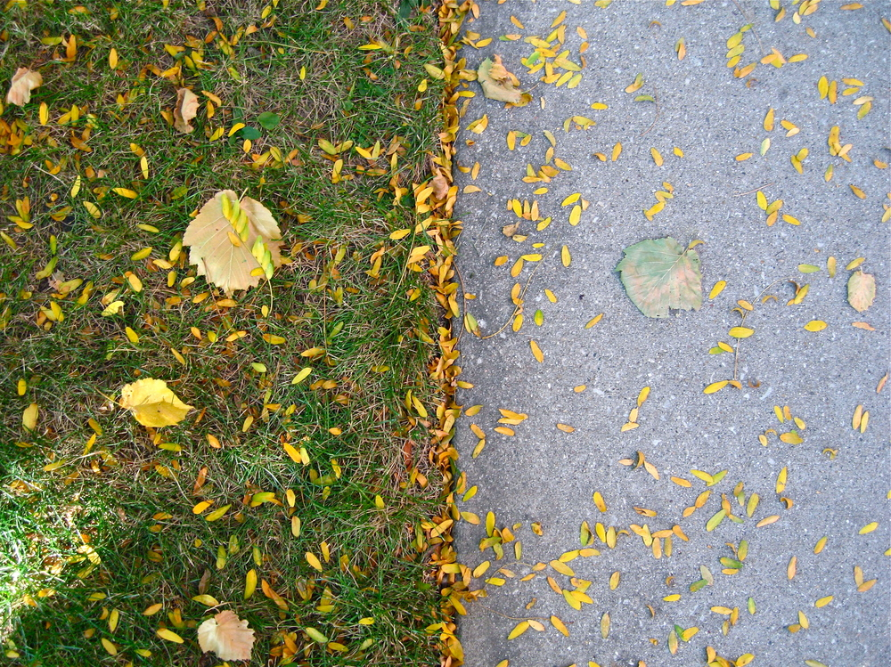 Parallel leaves , Chicago, October 2014