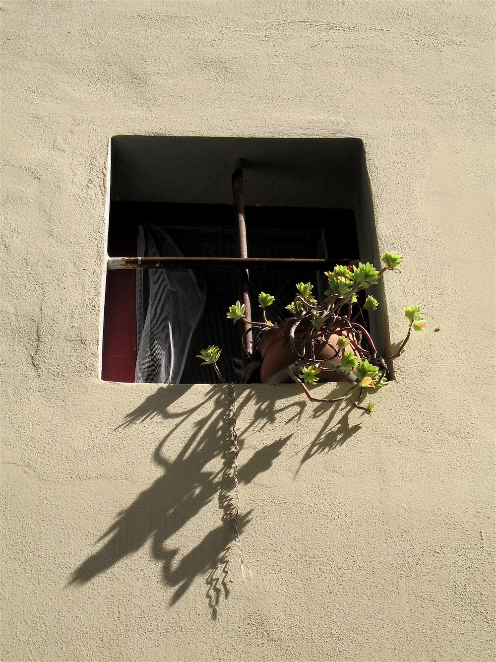 Plant in a window