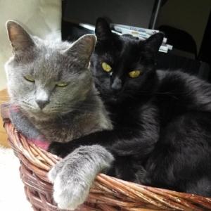 Smokey and Alexi