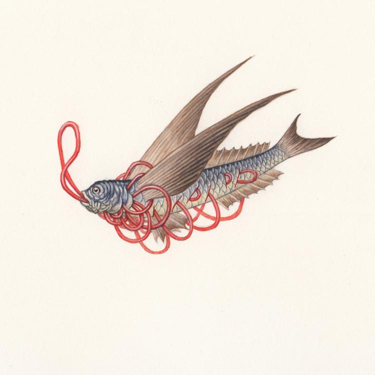 Flying Fish Nick Sheehy Showchicken