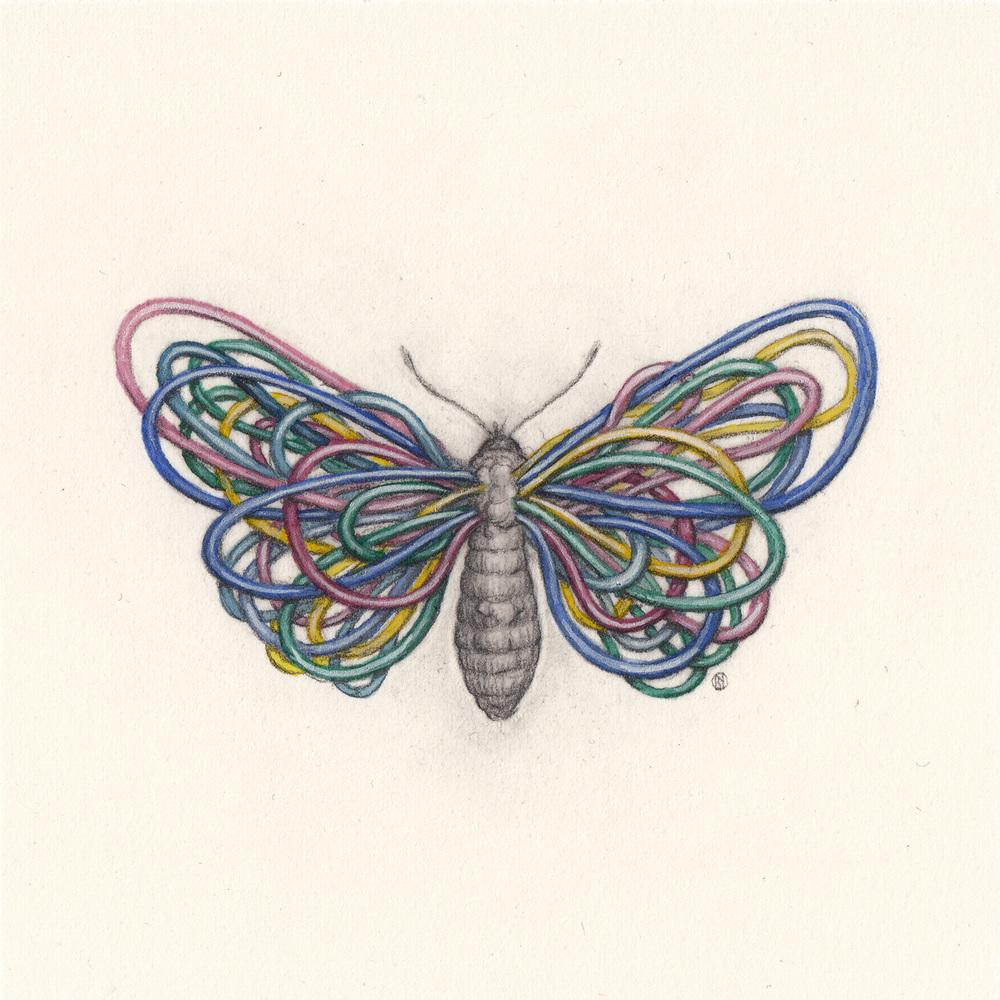 Butterfly_3.1.jpg