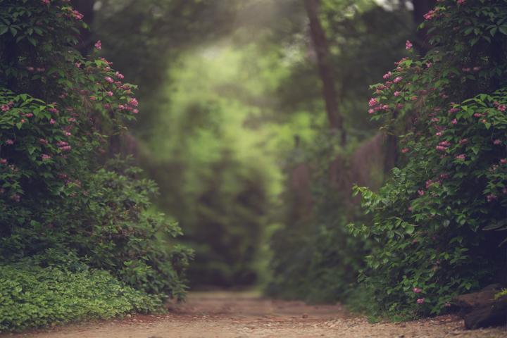 KCC Spring Digital BackgroundsBackdrops KCC Photoshop Actions