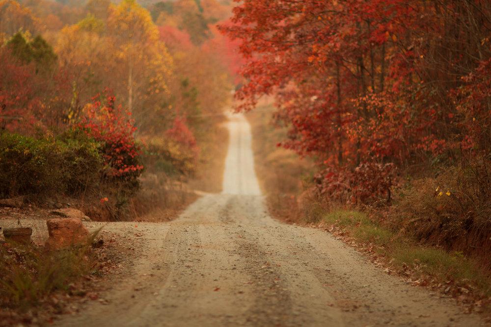 Fall Digital Backgrounds