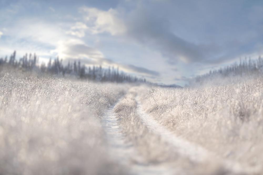 Winter Digital Backgrounds