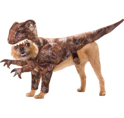 Yes, even your dog's costume ought to be conflict-free.  Source .