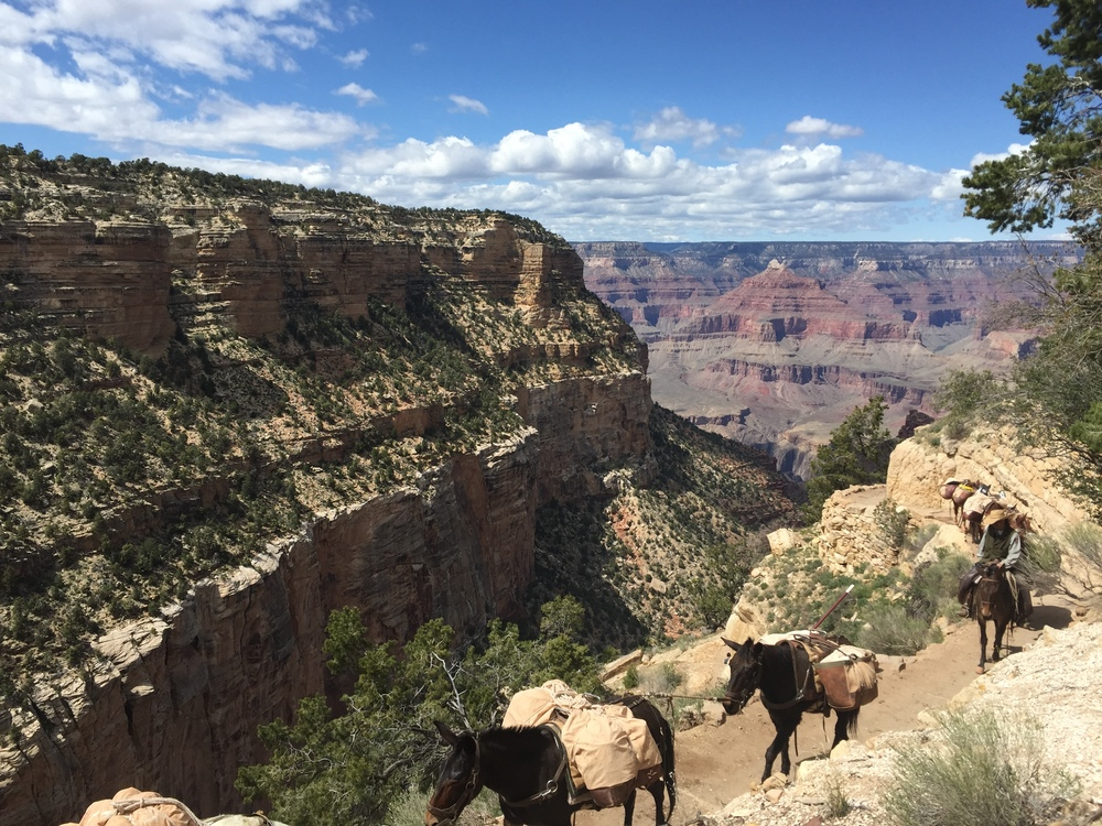 mule rides at the grand canyon