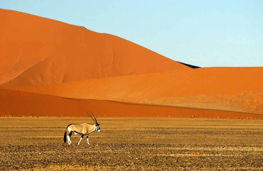 How to plan a safari in Namibia