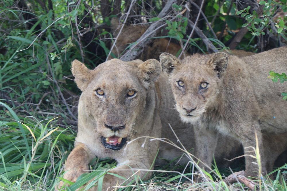 luxury-african-safari.JPG