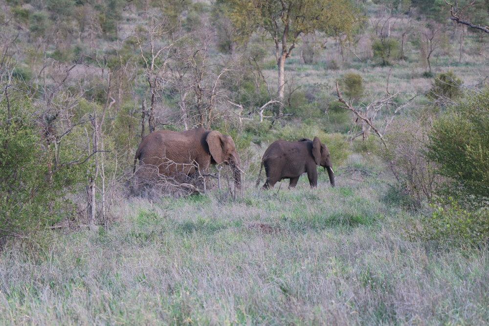 south-africa-safari.JPG