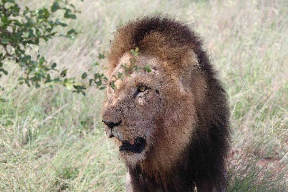 luxury-safari-south-africa.JPG