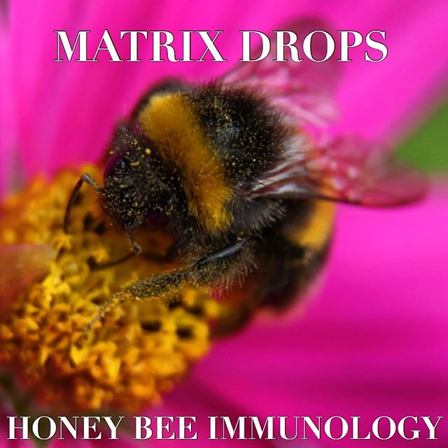 Beekepers Association's Secretary reports rescue of his honey bee stands as a result of one month MATRIX DROPS treatment of varroa mite-infected honey bee colonies.  Recent emergence of an unusual enemy, originated from Asia, the varroa mites (a.k.a. varroa destructor and varroa jacobsoni), have spread to Europe & many countries and are threatening colonies of bees spanning from Eastern/Central Europe towards the West. According to certain resources, honey bees are threatened with extinction due to the extremely aggressive reproduction of these external parasitic mites.  For the first time in history we can turn around their extinction and offer help through our Honey Bee Matrix Drops Protocol. For further inquiry, please email:  info@matrixdropsusa.com  #honeycomb #honeybees #bees #matrix #matrix drops #matrix drops quintessence #quintessence #spring is here #saving the bee colonies 🐝