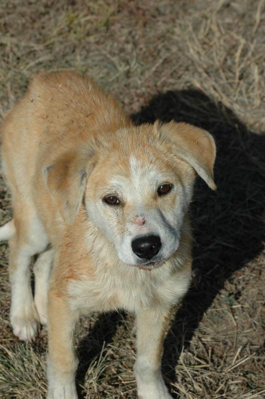 2009 Dog.JPG