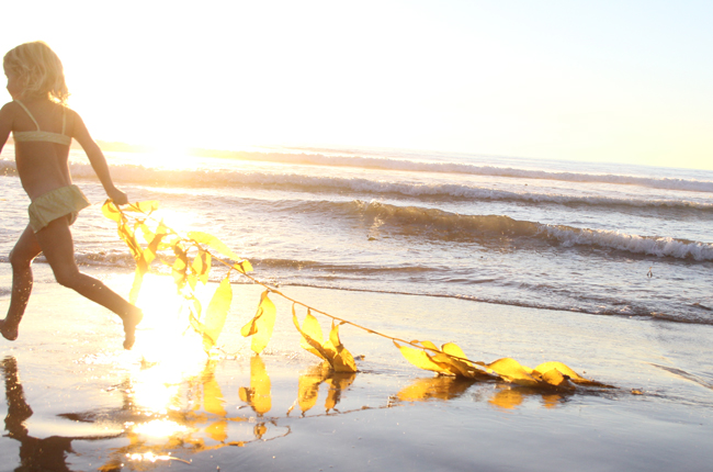 seaweed beach