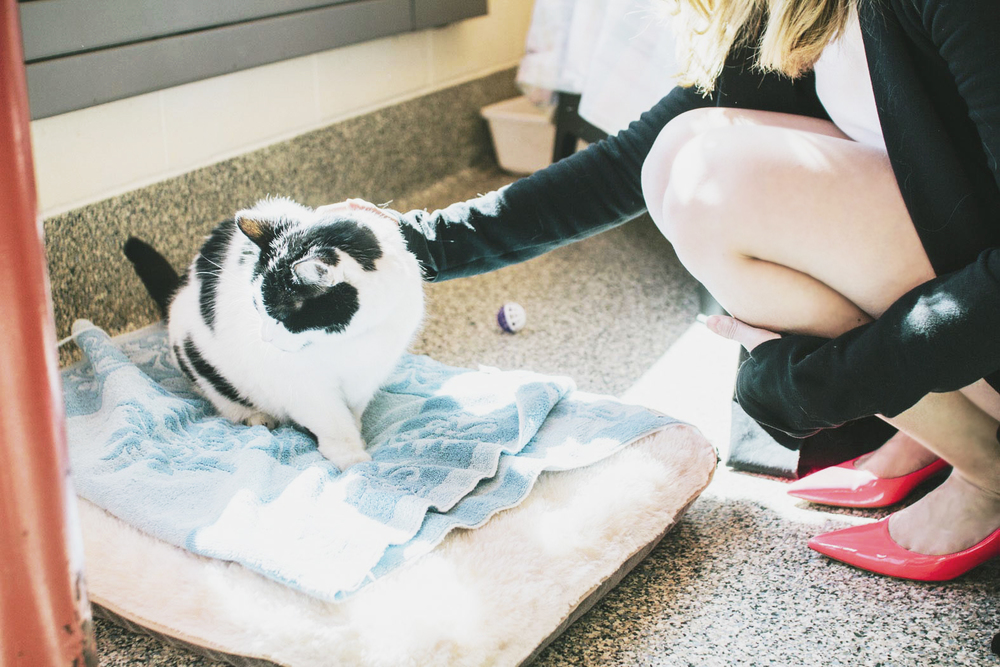 Meet Patches Boston MSPCA // photos by Justine M. Johnson // pink heels // scallop shorts | thoughtfulwish