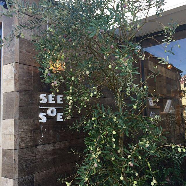 #seesoe  #オリーブ #雑貨 #美容室 今年もオリーブが実をつけました! 秋ですね〜