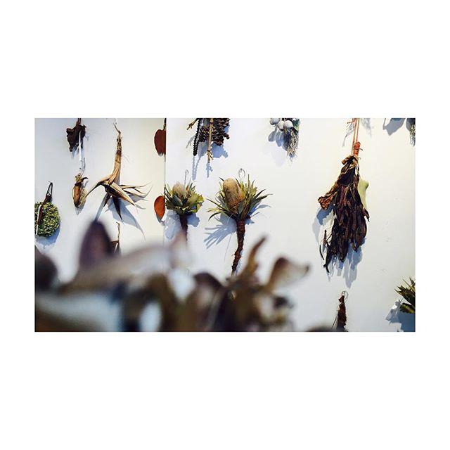 壁一面のドライフラワー!! もちろん販売しておりますので、お気軽にスタッフにお申し付けくださいねー!! #flower #seesoe #サロン #美容室 #craft #shop #salon #photo