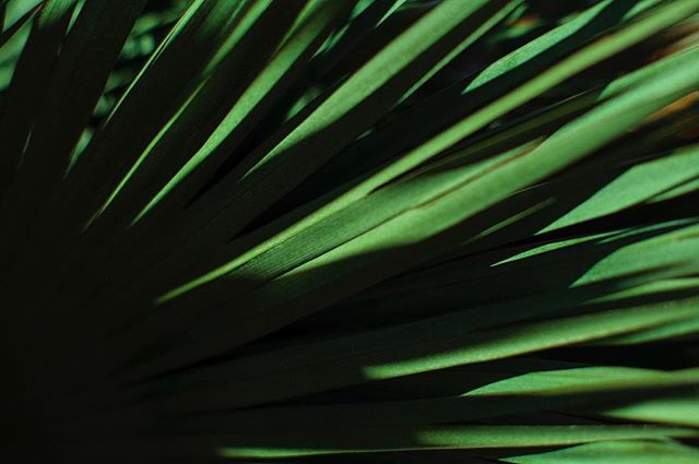 Barcelona 2016. ▪️ ▪️ ▪️ #instagram #instalike #instagood #instadaily #instagood2 #nature #shadow #Green #pattern #palm #canon #canon_photos #canon5dmarkii #agameoftones #igers #igersbcn #igerscatalunya #pic #picoftheday