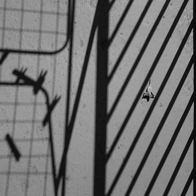 Barcelona 2017 ▪️ ▪️ ▪️ #sun #shadows #grey #instalike #instagood #instagood2 #blackandwhiteisworththefight #b&w #agameoftones #sombras #fujifilm #monochrome #x100t