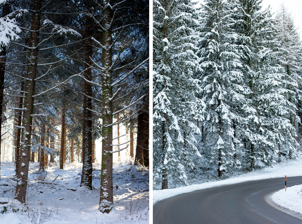 snow_forest_diptych.jpg