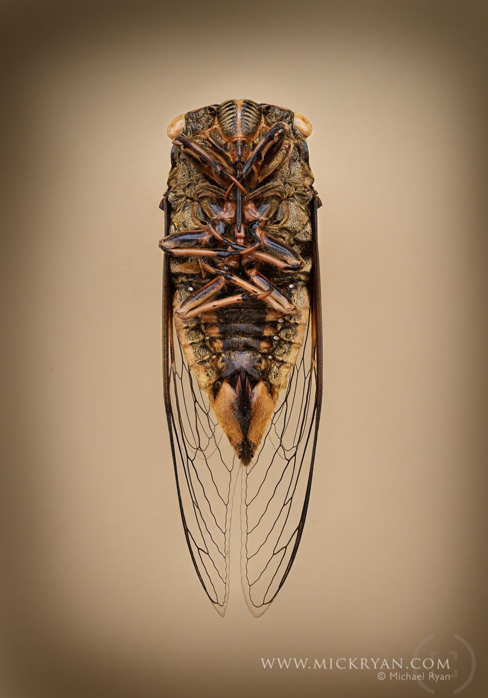 Cicada Portraits-1516.jpg