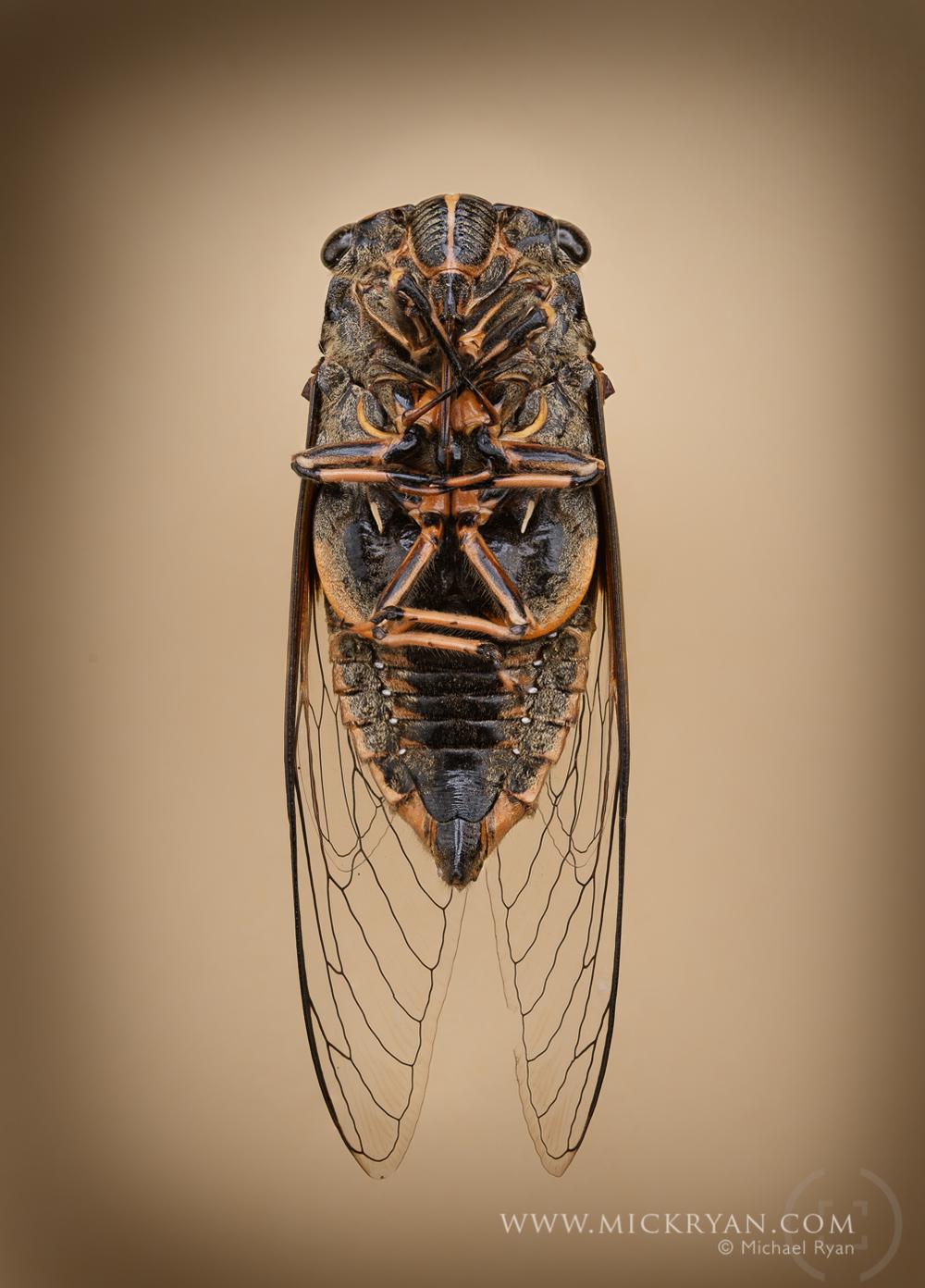 Cicada Portraits-1533.jpg