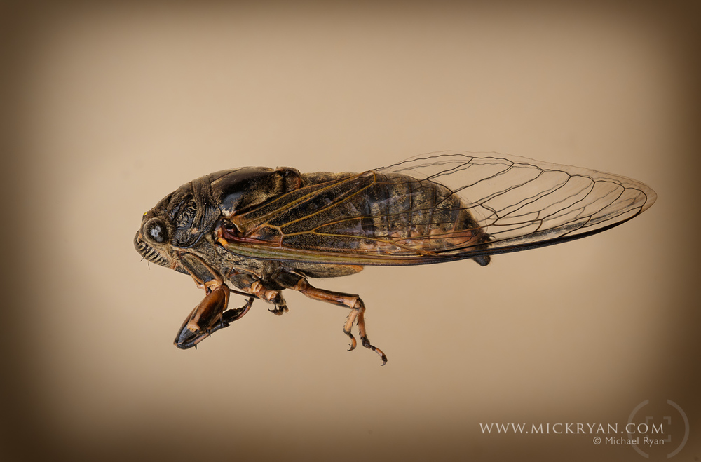 Cicada Portraits-1567-Edit-Edit.jpg