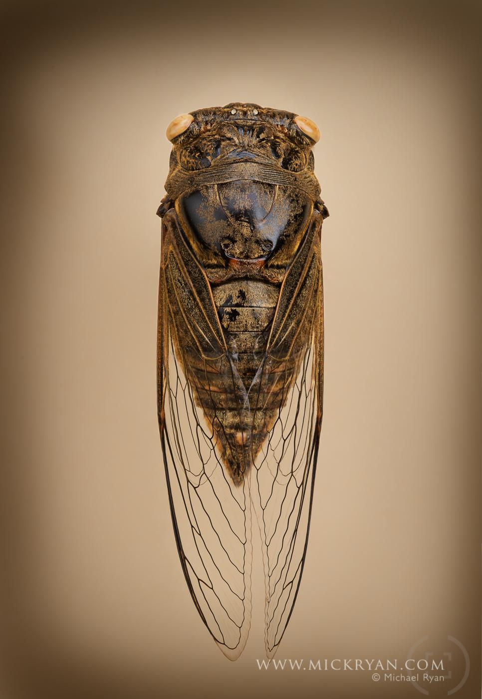 Cicada Portraits-1713.jpg